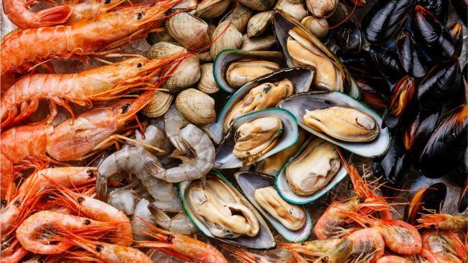 Shellfish – Động vật có vỏ cứng | Từ Điển Hình